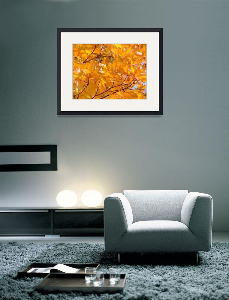 """Golden Orange Autumn Leaves Fall Trees art prints&quot  (2013) by BasleeTroutman"
