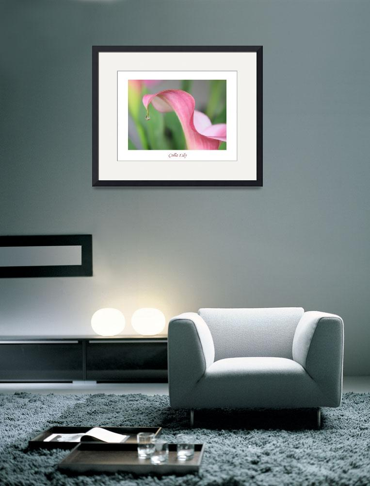 """Calla Lily with White Border&quot  by Groecar"