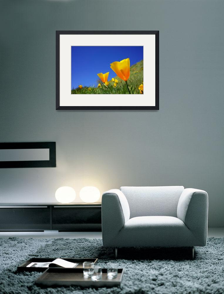 """Blue Sky Poppies Flowers Photography Art Prints&quot  (2014) by BasleeTroutman"