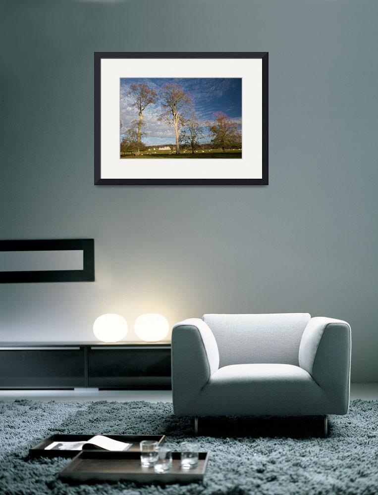 """Images of Ireland -Abstract Photo of an Old Beech&quot  by IrishPhotography"