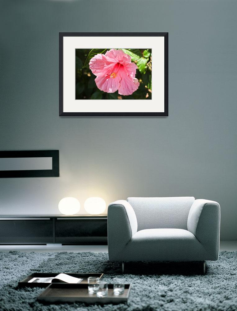 """Pink Hibiscus&quot  (2011) by julieandel"