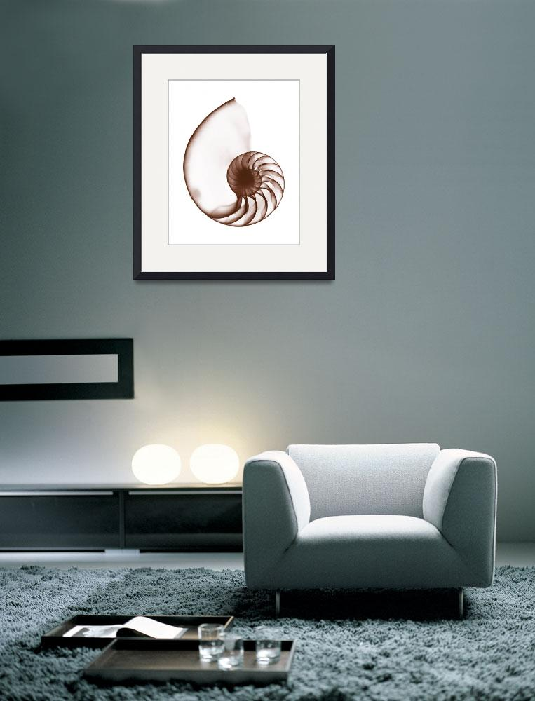 """Chambered Nautilus Shell&quot  (1973) by DennisMash"