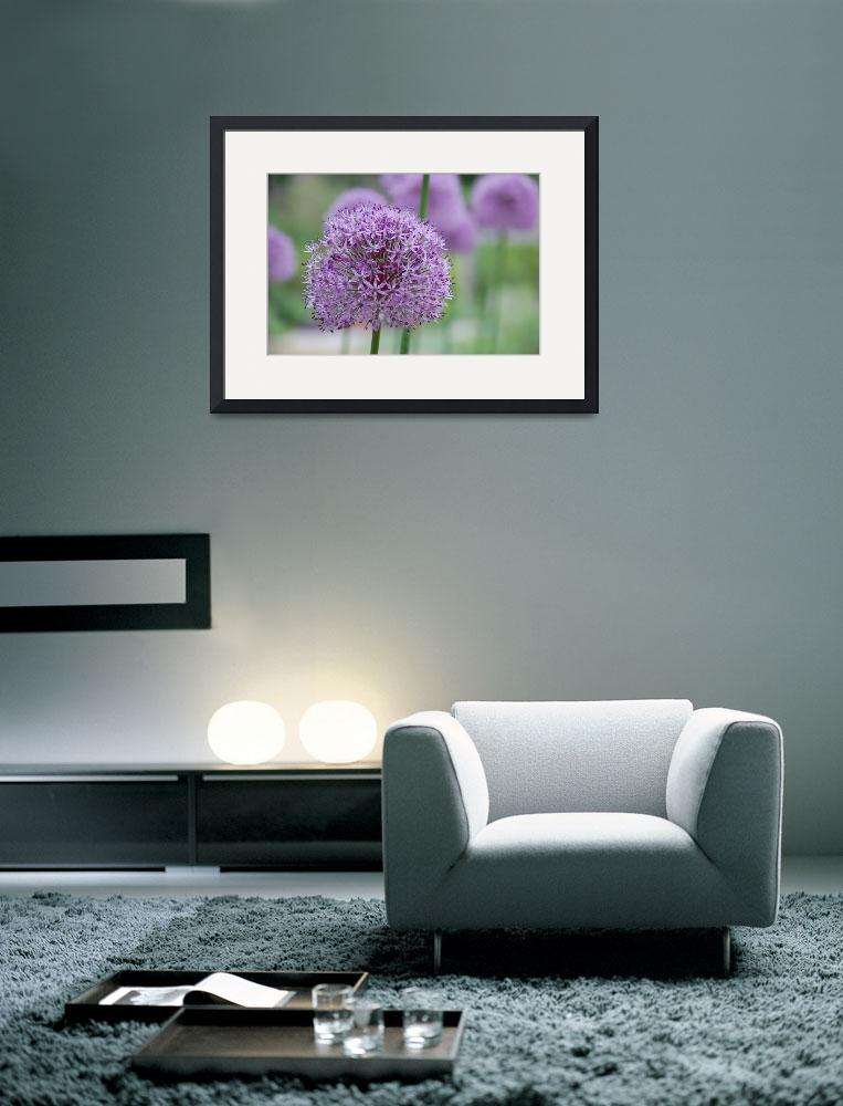 """Purple Flower&quot  (2010) by overbeck"