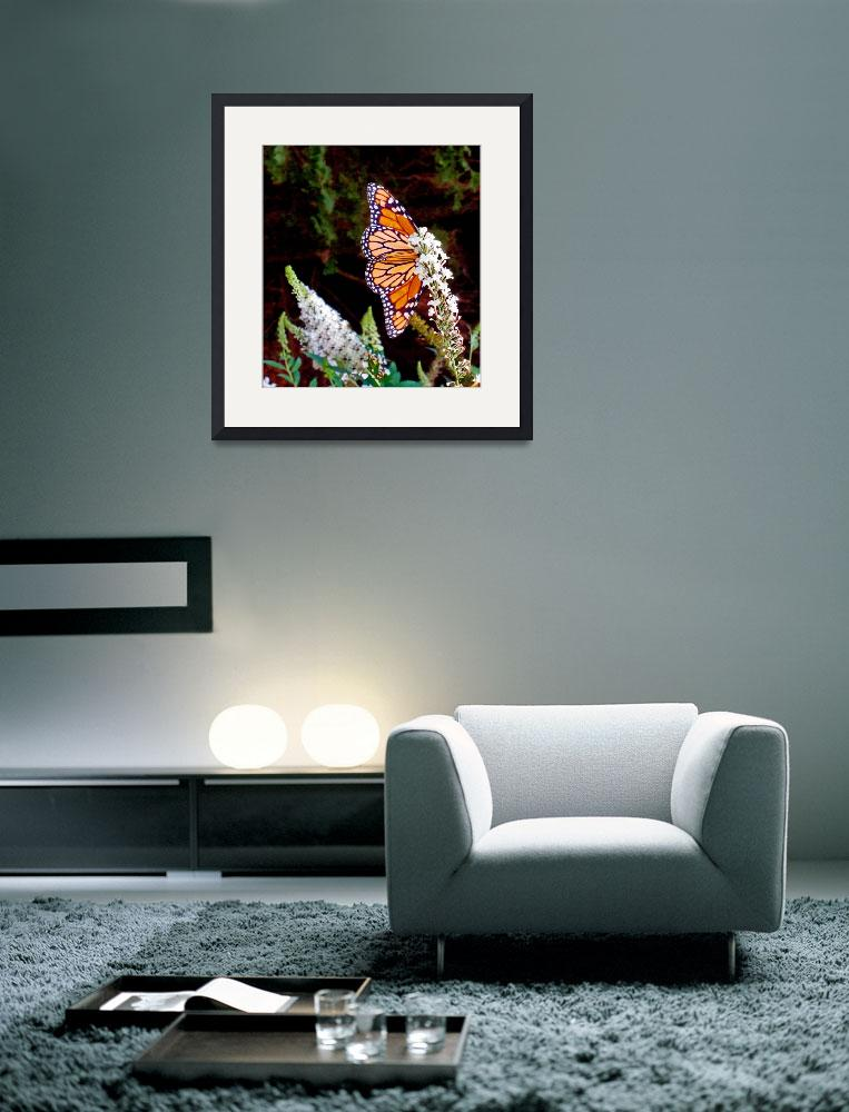 """Very Confident Monarch Butterfly&quot  (2010) by MichaelKarasik"
