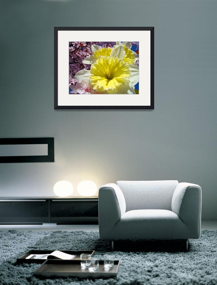 """Daffodil Flowers Floral art prints Spring Blossoms&quot  (2010) by BasleeTroutman"