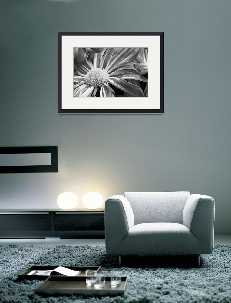 """Flower Flow Black and White&quot  (2010) by lightningman"