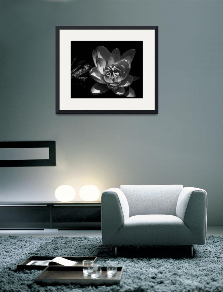 """Water Lily In Black and White&quot  (2012) by bavosiphotoart"
