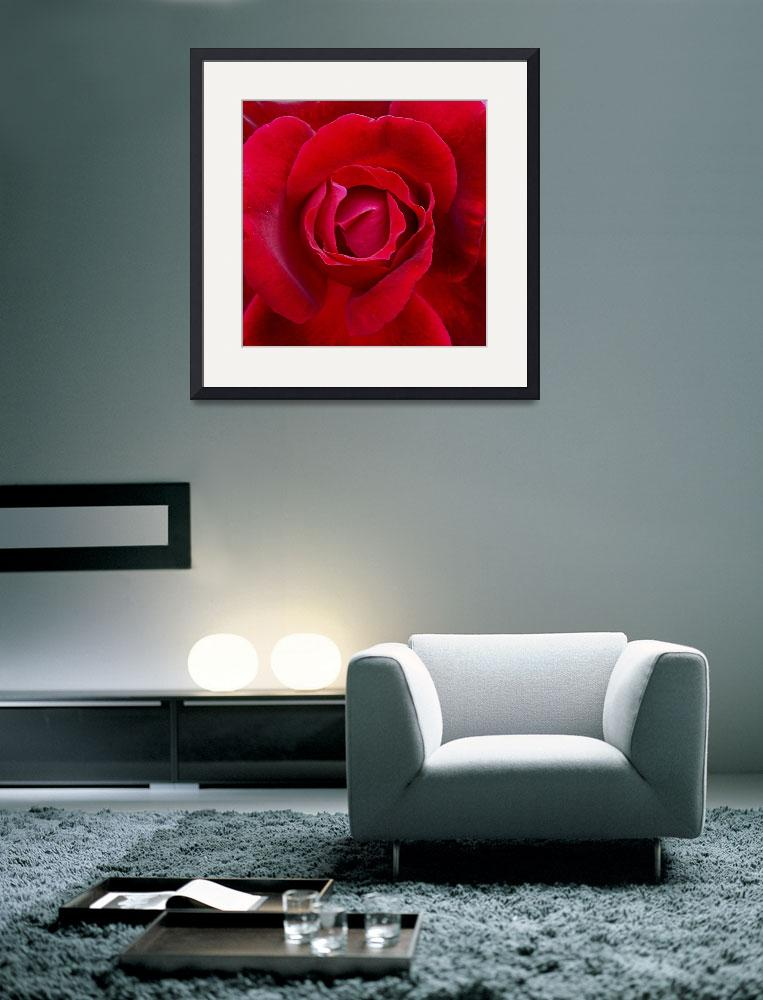 """Red Roses and Beauty&quot  (2006) by garlanddunston"