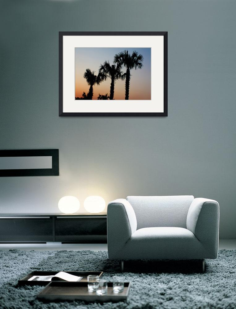 """Palm Trees at sunset DW&quot  (2010) by onsomeotherstuff"