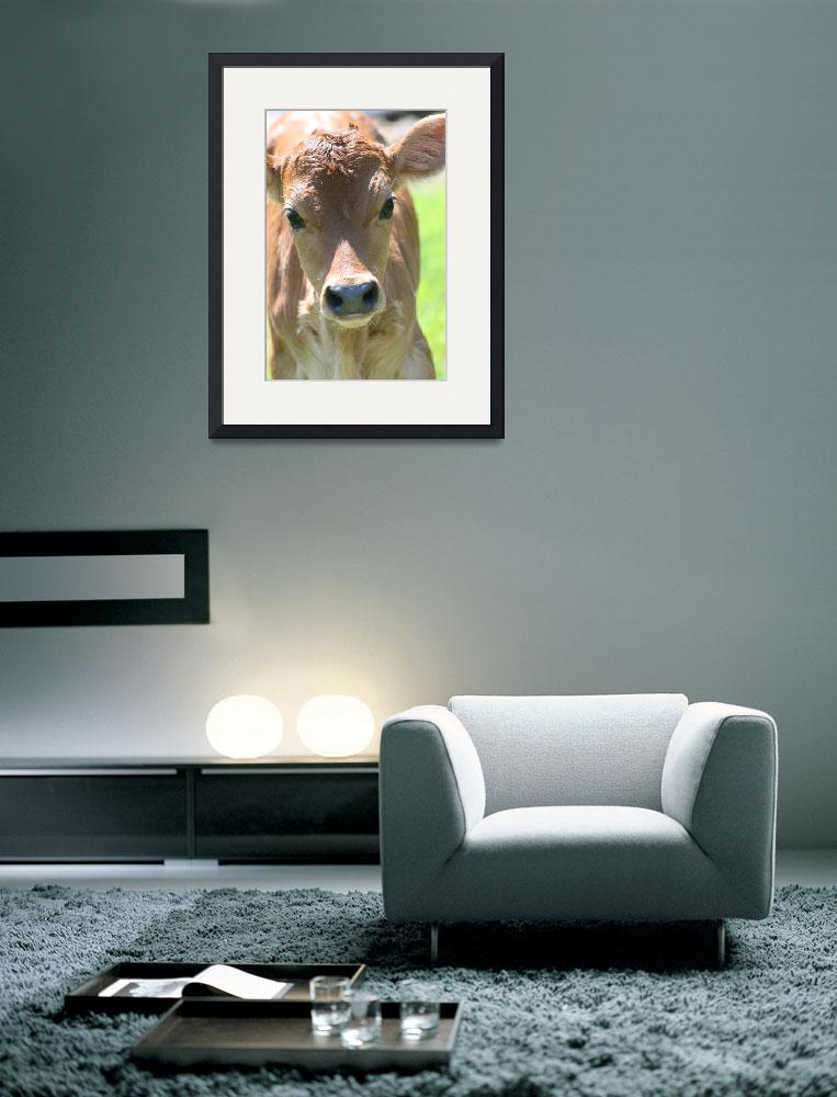 """Guernsey Calf&quot  (2012) by kimmerhaw"