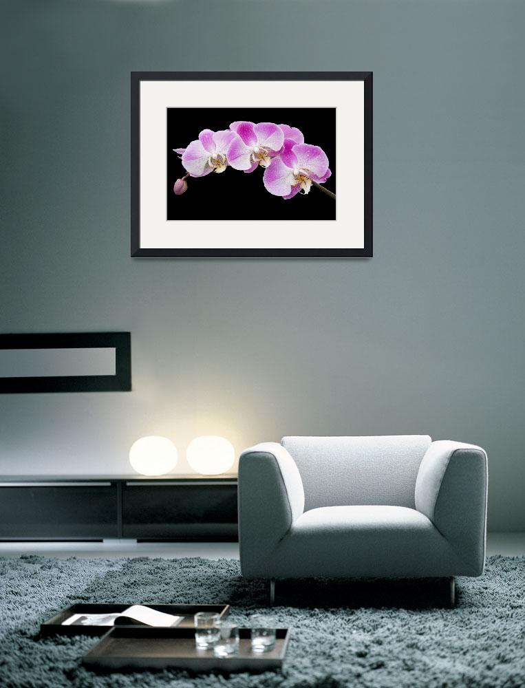"""Orchids in the Rain&quot  (2011) by AnnG"