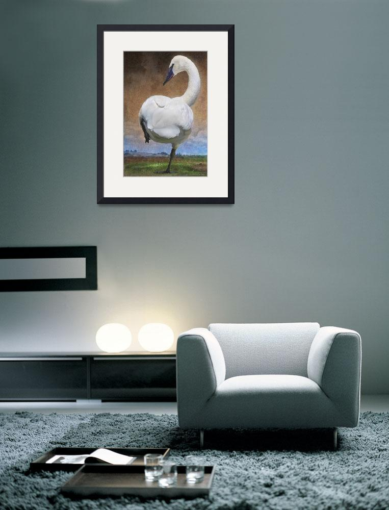 """crossing the great plains - trumpeter swan&quot  (2011) by rchristophervest"