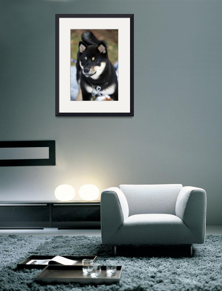 """Shiba Inu Puppy&quot  (2010) by ImageArt-Photography"