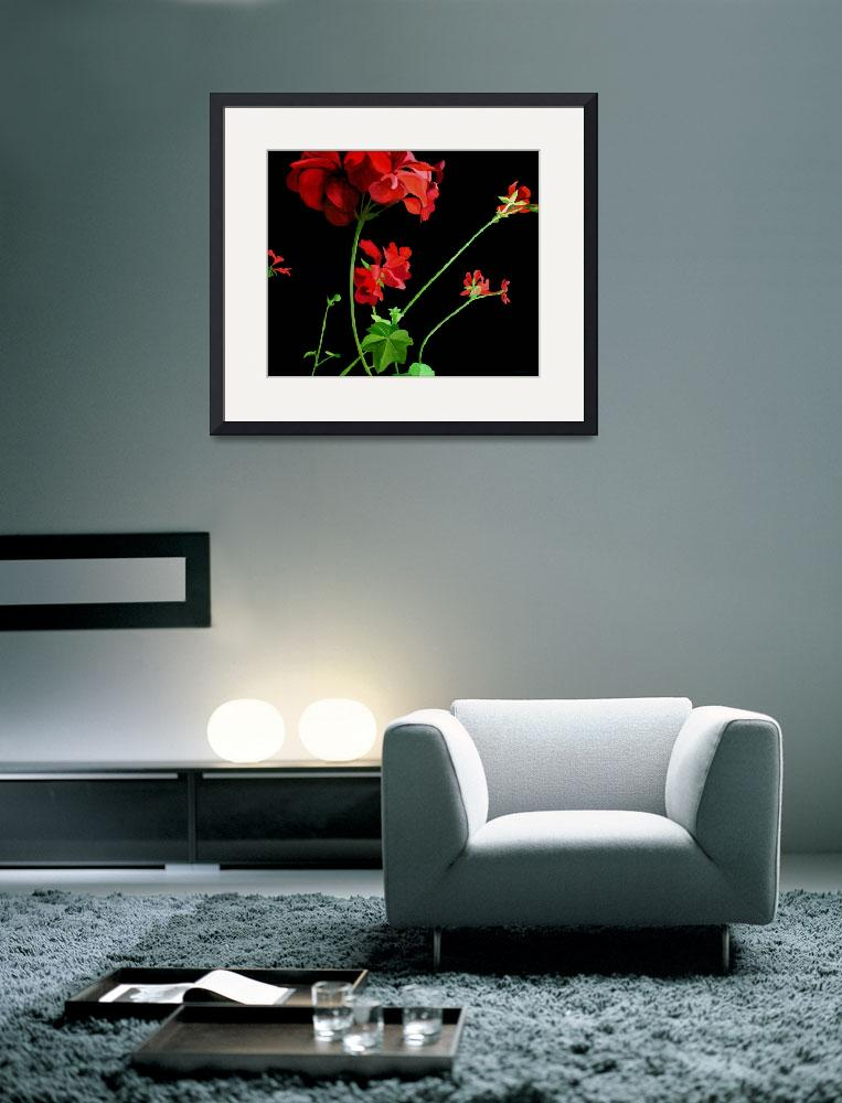 """Geranium&quot  (2010) by lizturnerart"