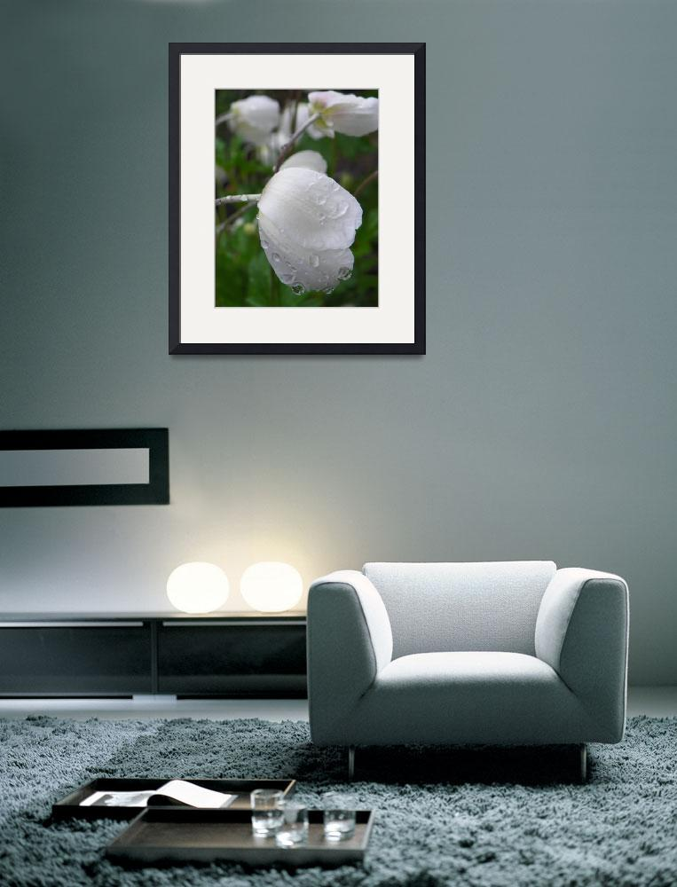 """Delightful White Snowdrop Anemone&quot  (2013) by vpicks"