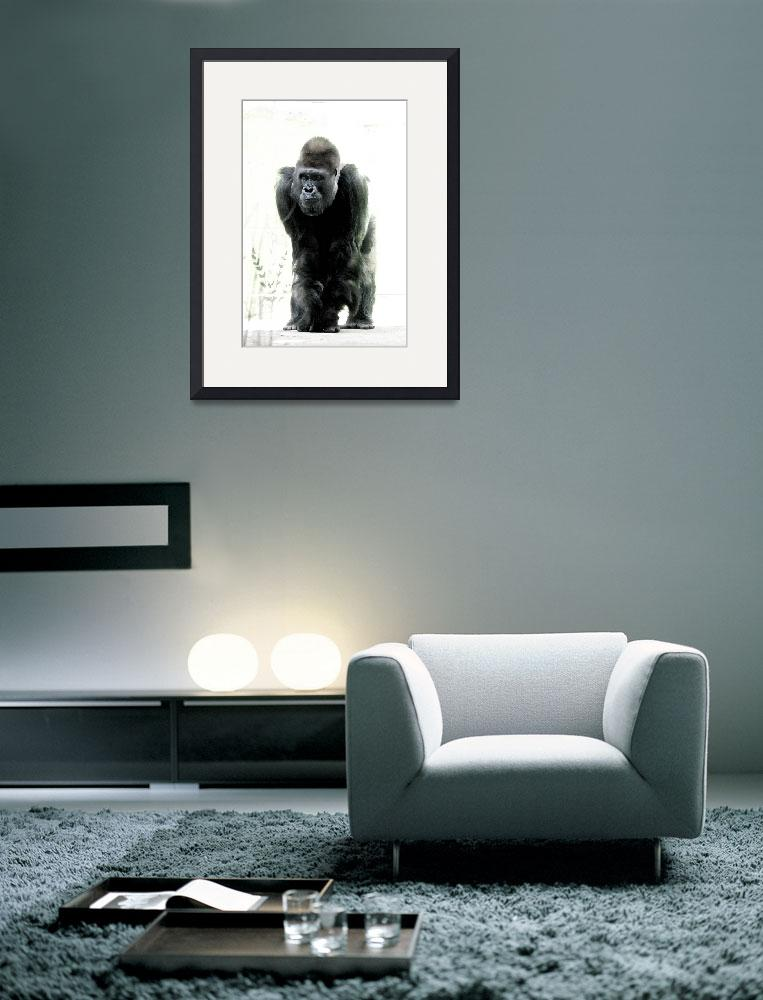 """Silverback&quot  (2008) by jonathanfleming"