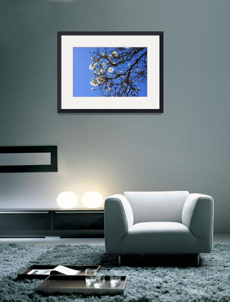 """Spring White Magnolia Flowers Tree Blue Sky&quot  (2014) by BasleeTroutman"