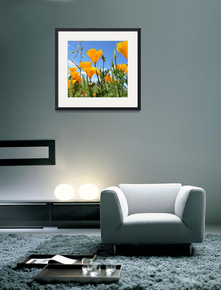"""June Poppies&quot  (2011) by PatriciaSanders"