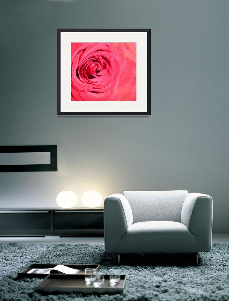 """red rose 8&quot  (2009) by Lisajoy"