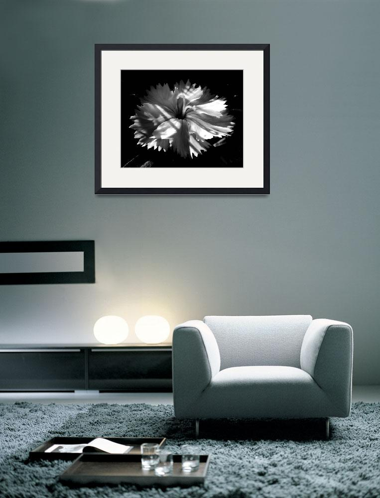 """White Flower Blossom&quot  (2009) by bavosiphotoart"