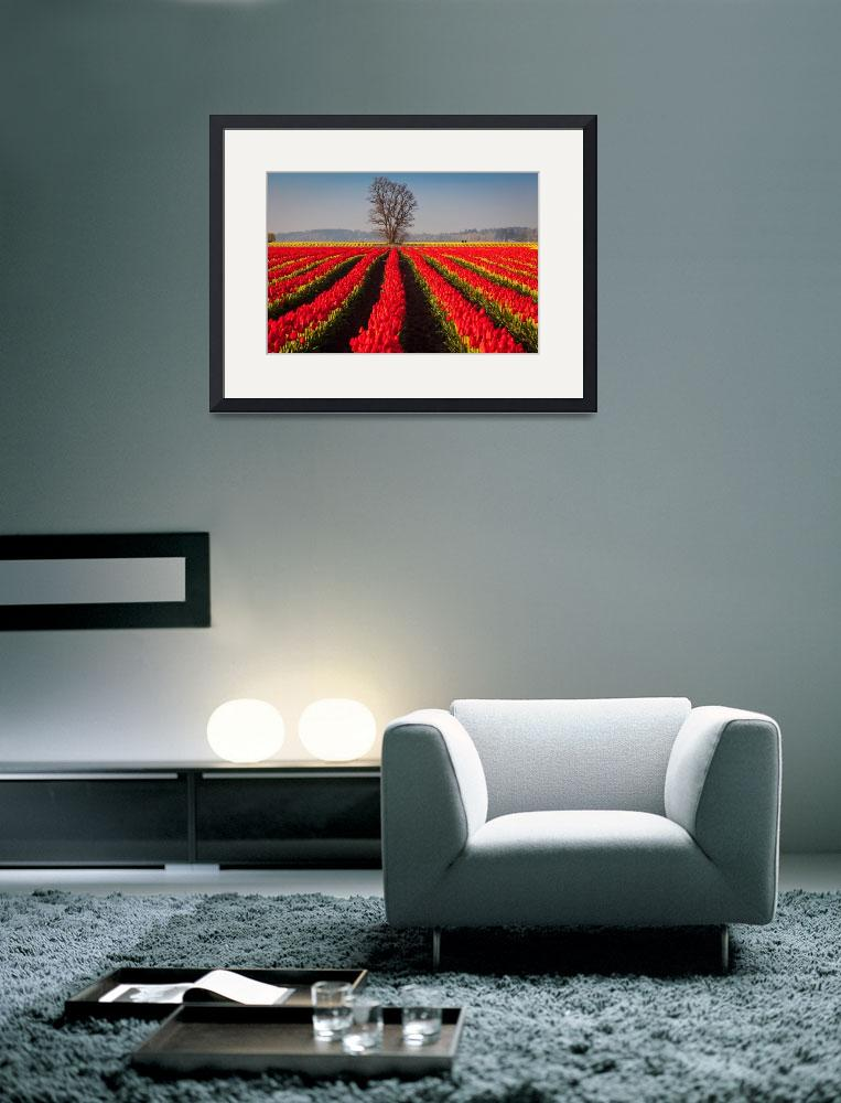 """Tulips and Tree&quot  (2011) by Inge-Johnsson"