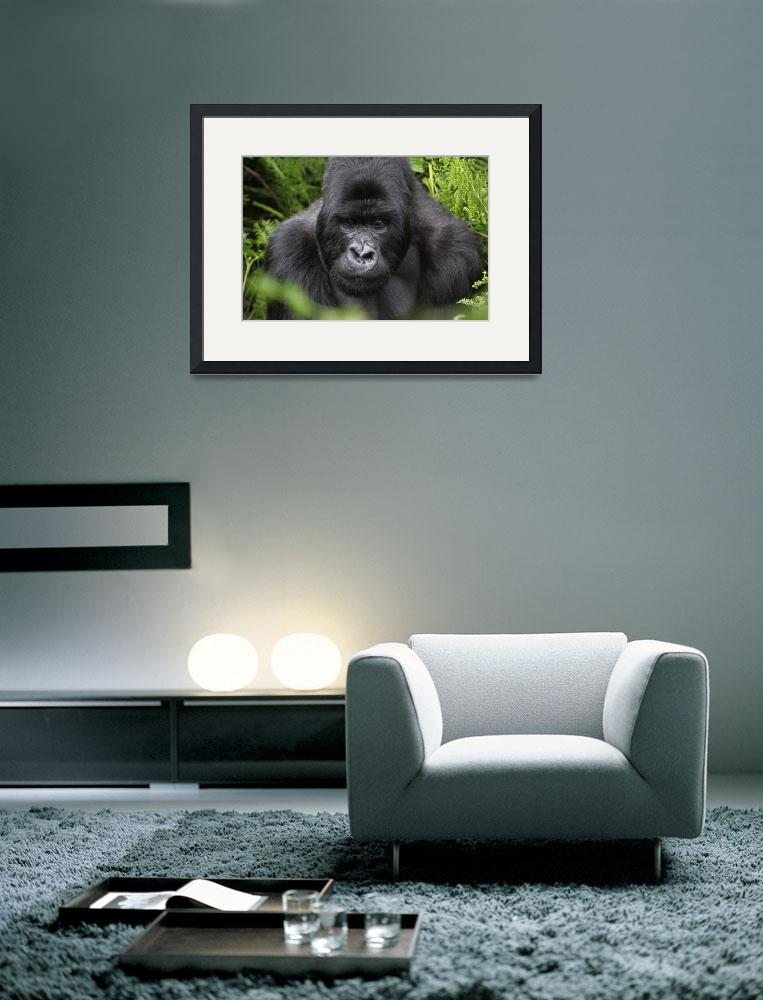 """Silverback&quot  (2009) by RobertGarner"