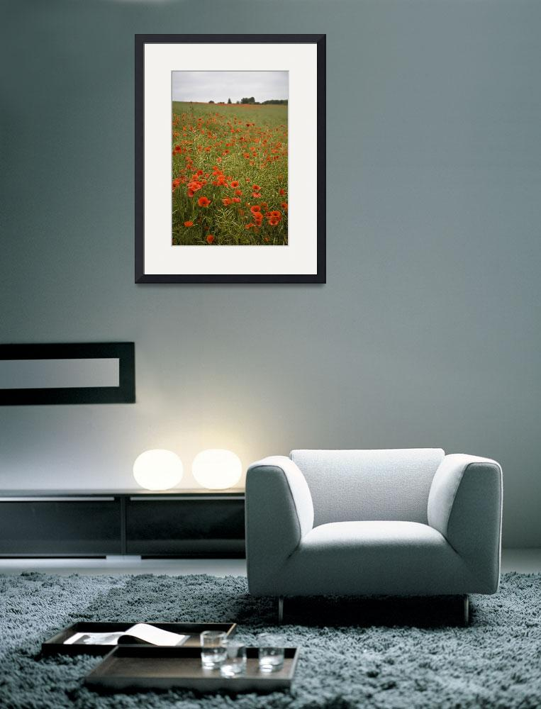 """Poppies&quot  (2010) by michaelcarlucci"