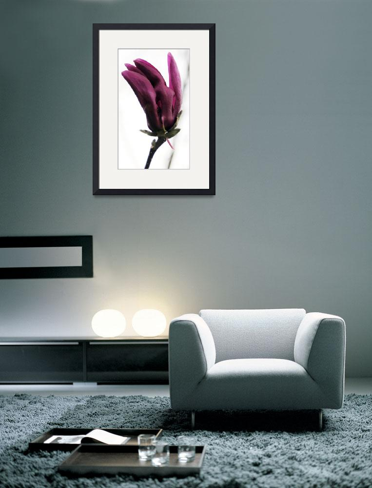 """Magnolia Series #1&quot  (2010) by halehmahbod"