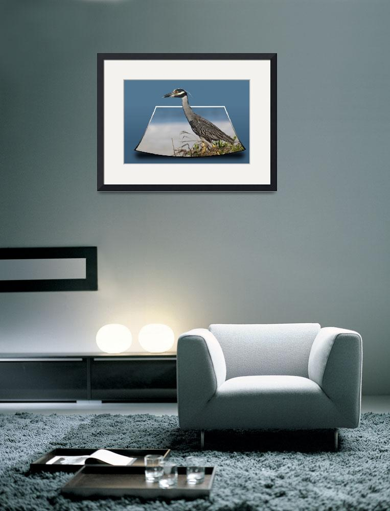 """Yellow-crowned Night-Heron out of bounds&quot  (2011) by shutterbugdan"