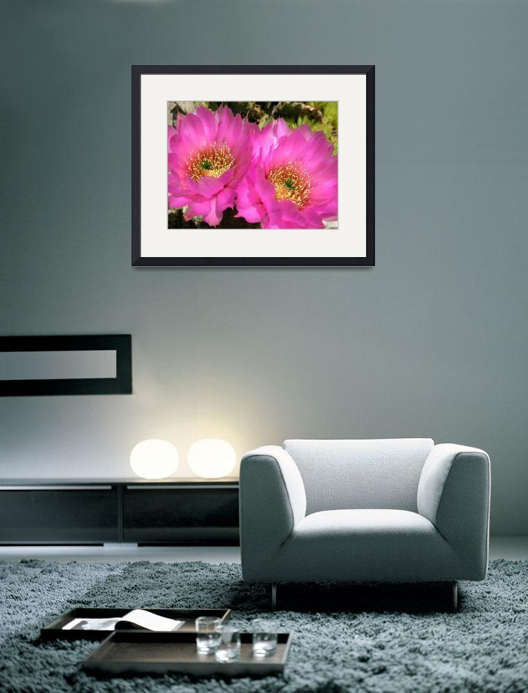 """Mauve hedgehog cactus flowers&quot  (2004) by robhuntley"