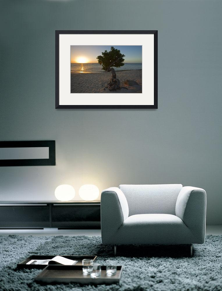 """Beach Sunset with a Fofoti Tree, Aruba,&quot  (2008) by George_Oze"
