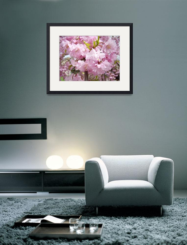 """FLOWER BLOSSOMS Art Pink Spring Tree Blossom&quot  (2009) by BasleeTroutman"