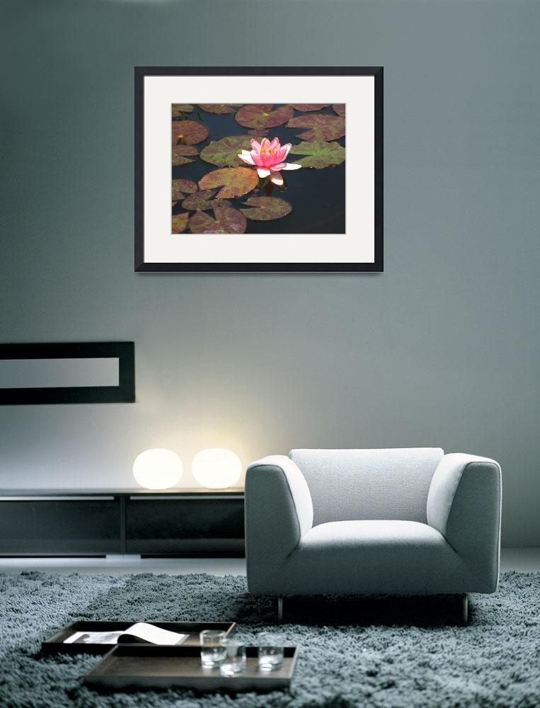 """Water Lily&quot  by marlenepringle"