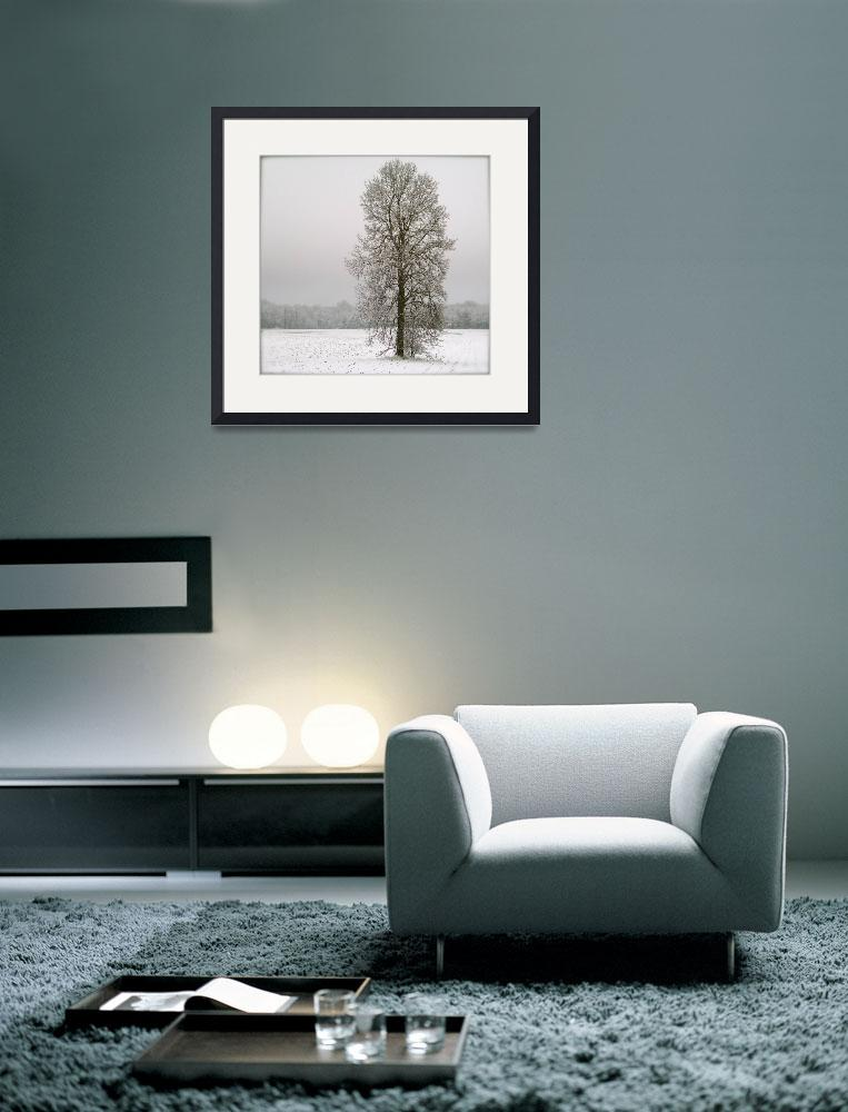 """The Winter Tree&quot  (2008) by KellyMonahan"