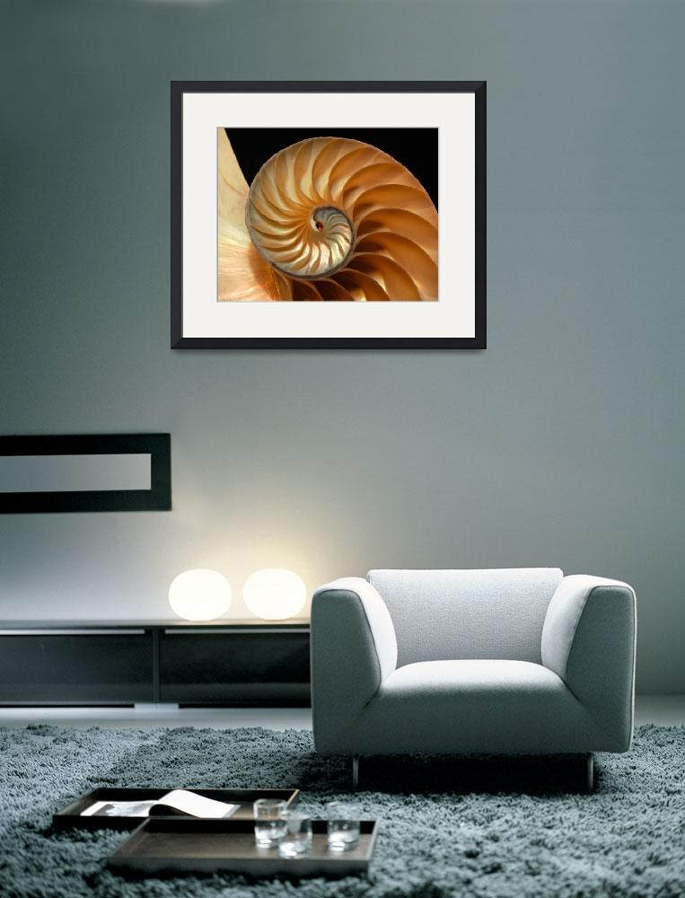 """Brilliant Nautilus&quot  (2005) by WilshireImages"