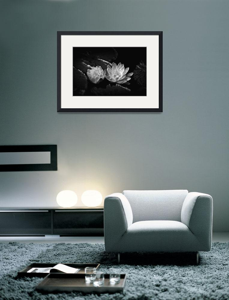 """Two Water Lilies In Black and White&quot  (2012) by bavosiphotoart"