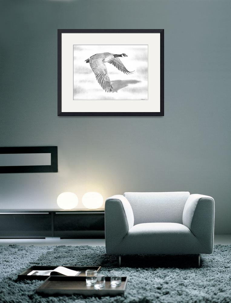 """""Northern Bound"" Canadian Goose in flight&quot  (2010) by iLovePencils"