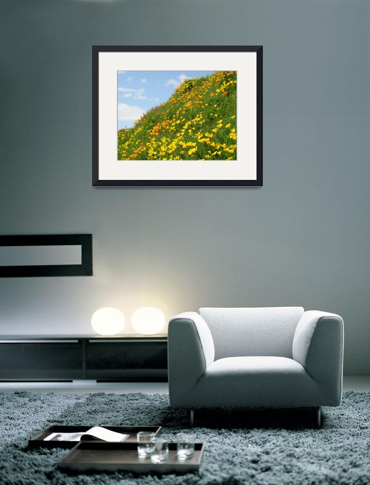 """Hillside Poppy Flower Meadow 17 Poppies Artwork&quot  (2009) by BasleeTroutman"