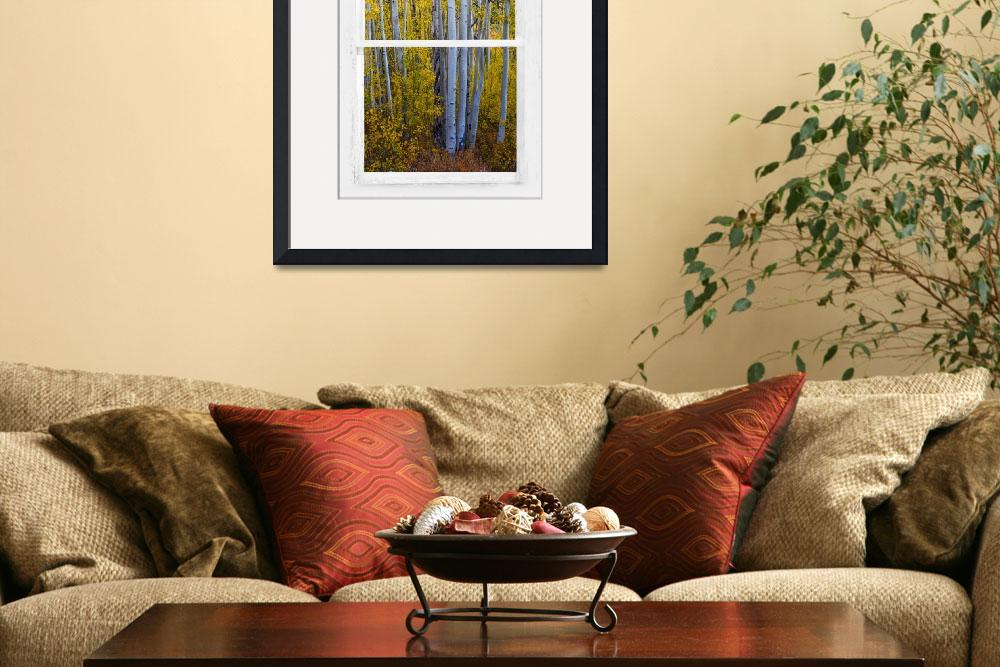 """Gold Aspen Forest White Rustic Window View&quot  (2015) by lightningman"