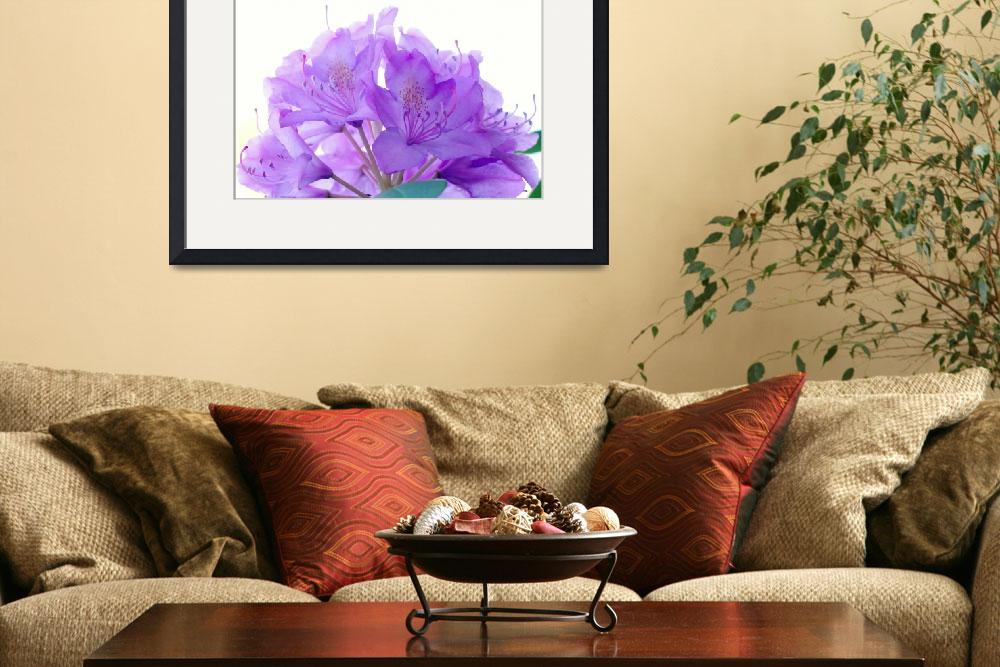 """Purple Rhododendron&quot  (2012) by bavosiphotoart"