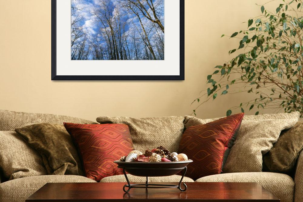 """Low angle view of bare tree branches&quot  by Panoramic_Images"