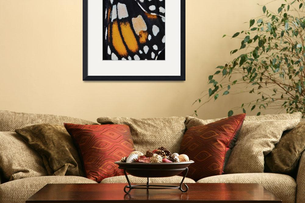 """Monarch Butterfly Wing Abstract No4&quot  (2011) by evansonart"