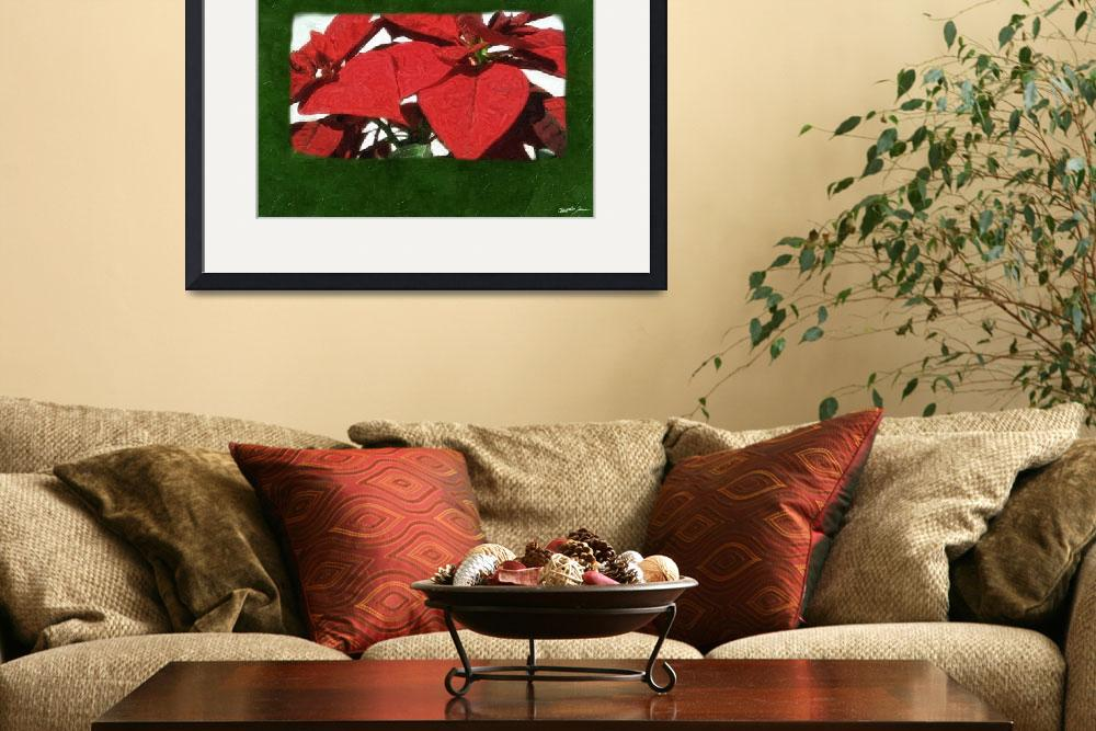 """Red Poinsettias 2&quot  (2009) by ChristopherInMexico"