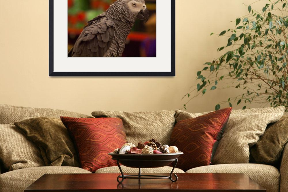 """African Grey Parrot 2&quot  (2011) by janesprints"