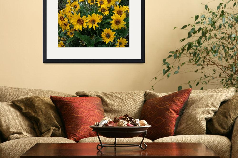 """Arrowleaf balsamroot posteredges&quot  by eye4nature"