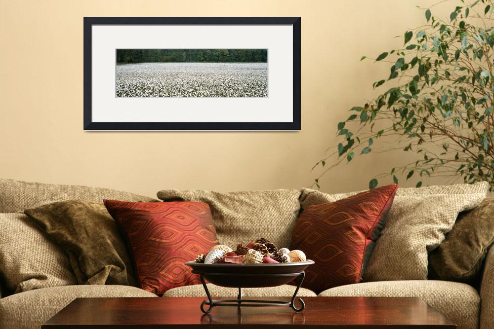 """Cotton Crop Madison County TN&quot  by Panoramic_Images"