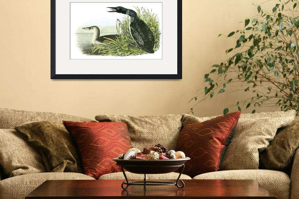 """Common Loon Bird Audubon Print&quot  by ArtLoversOnline"