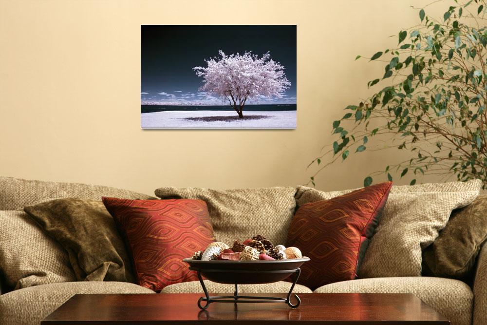 """a winter summer - infrared tree landscape&quot  (2007) by miir"
