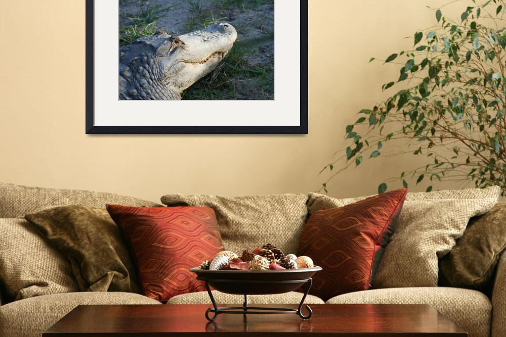 """Grandaddy Gator IMG_2623&quot  by suzanneseverglades"