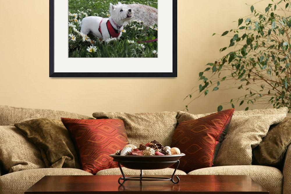 """The World Of Daisies - West Highland White Terrier&quot  by artsandi"